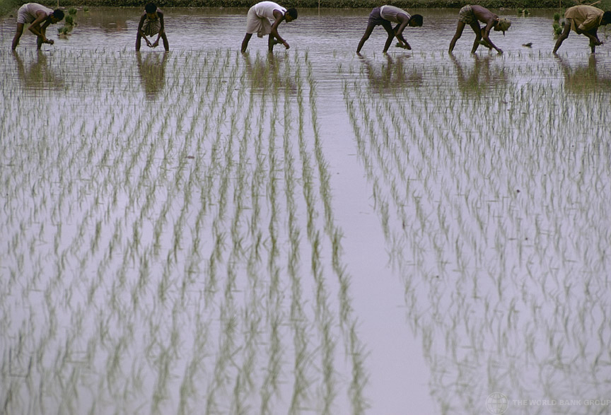 South Asian Farming